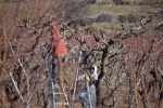 Prunning workers