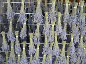 lavender drying racks
